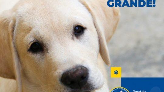 ! Il Canendario 2021 del Servizio Cani Guida dei Lions